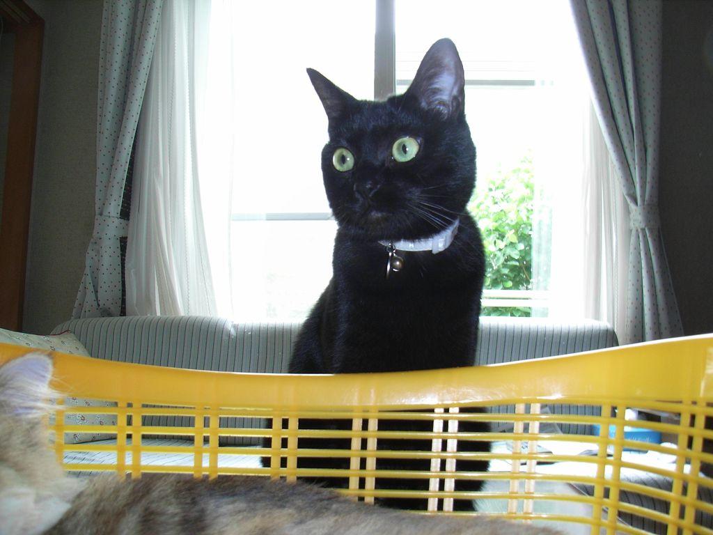 ひさびさの猫たち_c0025115_192253.jpg