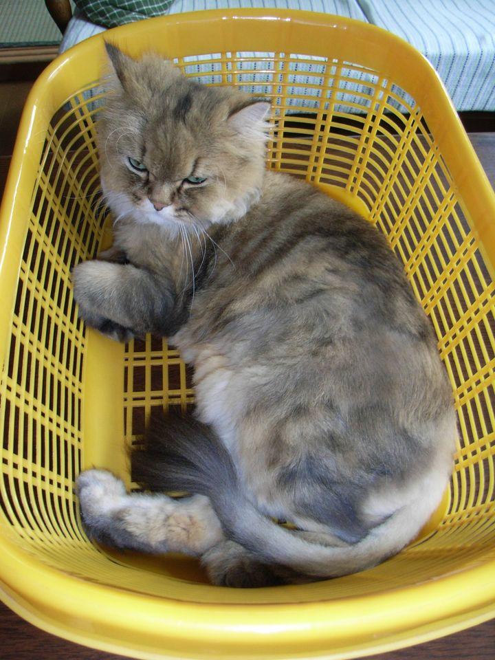 ひさびさの猫たち_c0025115_1925182.jpg