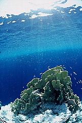 CHUUK島(トラック島)フォトギャラリー パート2_d0046025_17295466.jpg