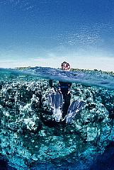 CHUUK島(トラック島)フォトギャラリー パート2_d0046025_17321144.jpg