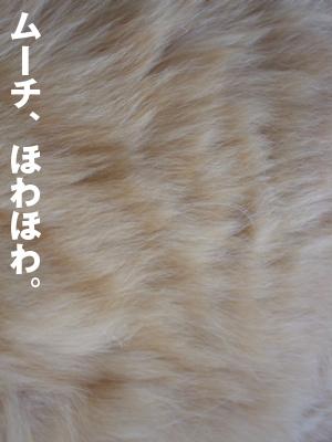 b0080632_1744268.jpg