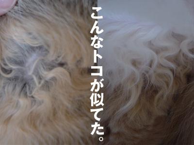b0080632_18224597.jpg