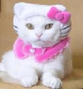 あなたの飼い猫をキティちゃんにする、(多分)たった一つの方法。_c0016141_1264053.jpg