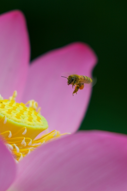 ハチスに蜂っす_f0018464_634022.jpg
