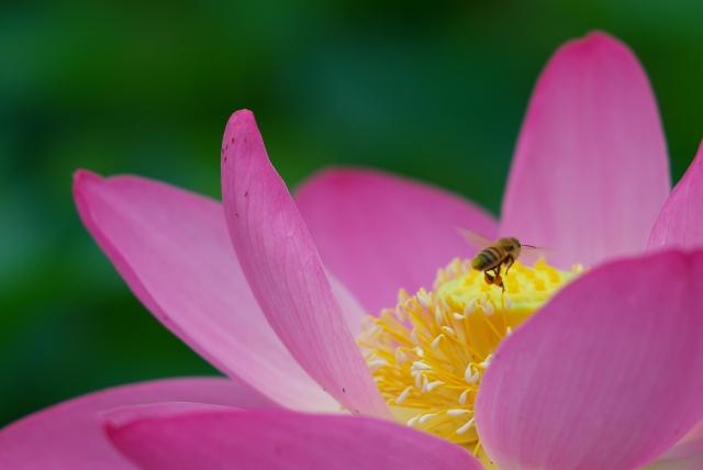 ハチスに蜂っす_f0018464_6354934.jpg