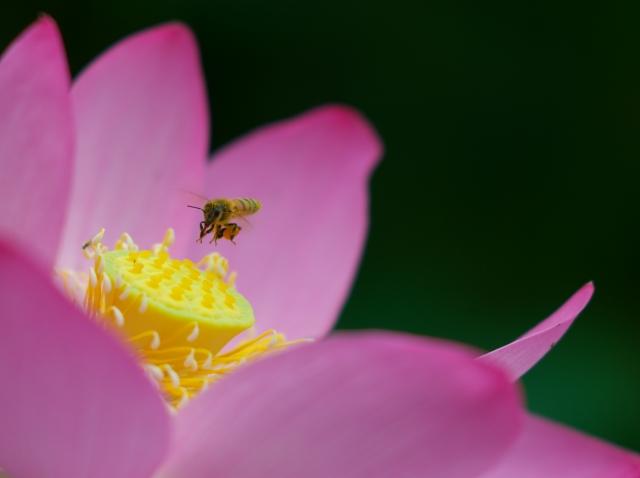 ハチスに蜂っす_f0018464_6363538.jpg