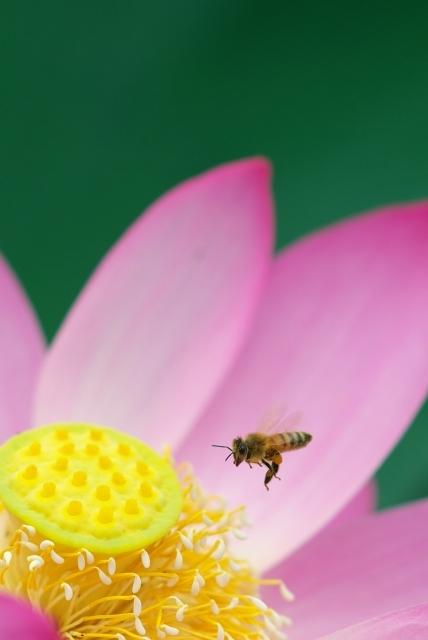 ハチスに蜂っす_f0018464_6383894.jpg