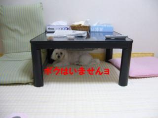 f0145192_1604637.jpg