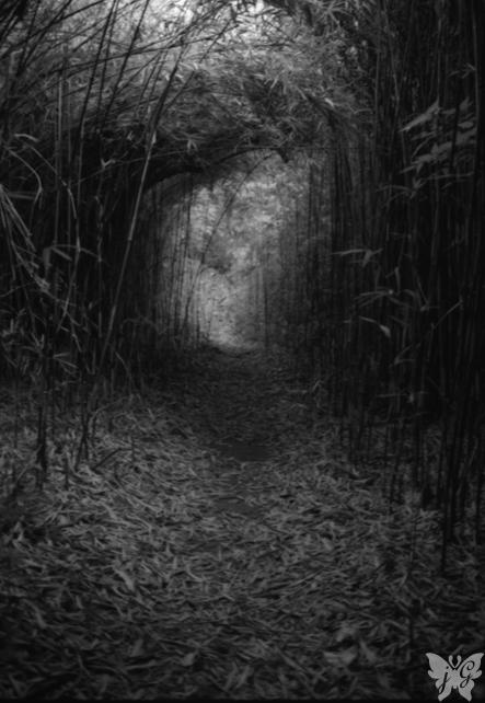 小笹隧道_b0053900_056527.jpg