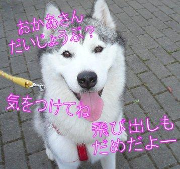 f0112407_1153137.jpg