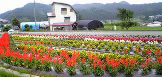 花いっぱい運動_f0081443_21331953.jpg