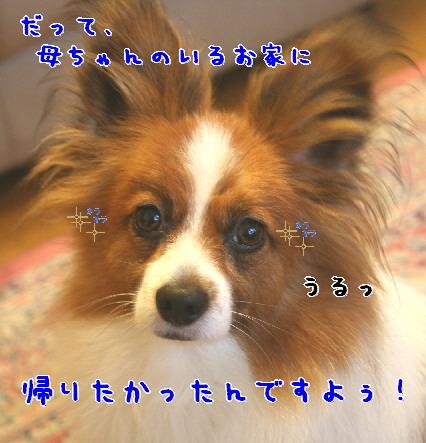 d0013149_925892.jpg