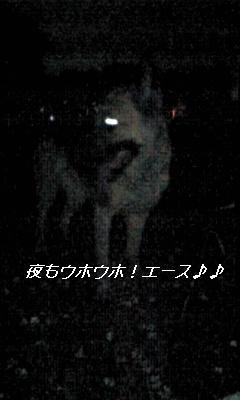 a0060497_2231980.jpg