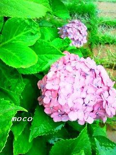 b0098750_071535.jpg