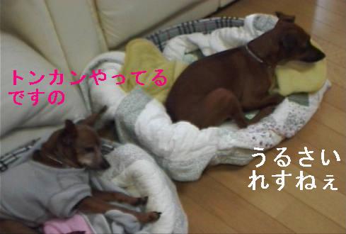 f0123589_157498.jpg