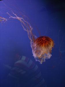 水族館に行きました~ジェノバ_f0106597_21431255.jpg