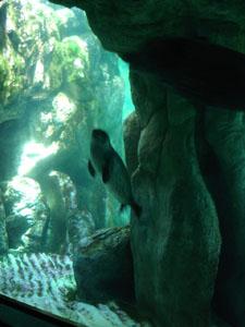 水族館に行きました~ジェノバ_f0106597_21471410.jpg