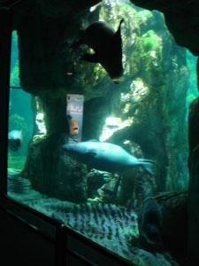 水族館に行きました~ジェノバ_f0106597_21482674.jpg