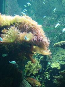 水族館に行きました~ジェノバ_f0106597_21531785.jpg