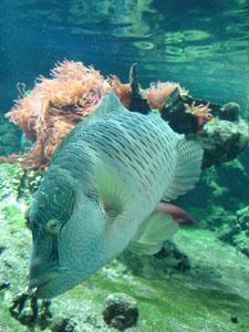 水族館に行きました~ジェノバ_f0106597_21535774.jpg