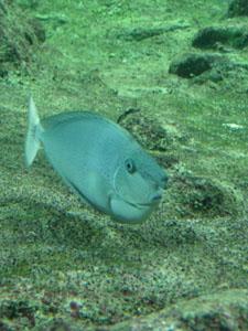 水族館に行きました~ジェノバ_f0106597_21564643.jpg