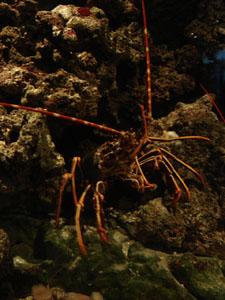 水族館に行きました~ジェノバ_f0106597_221529.jpg