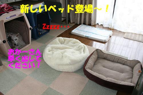 f0121712_17484283.jpg