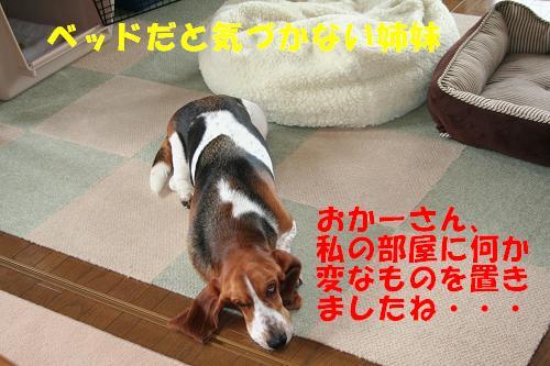 f0121712_17491332.jpg