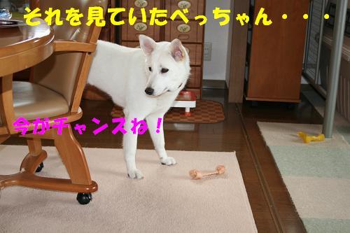 f0121712_1750745.jpg