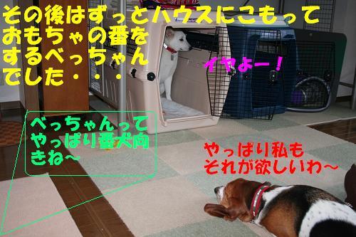 f0121712_1752684.jpg