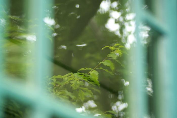 木の葉は緑_e0077521_0345099.jpg