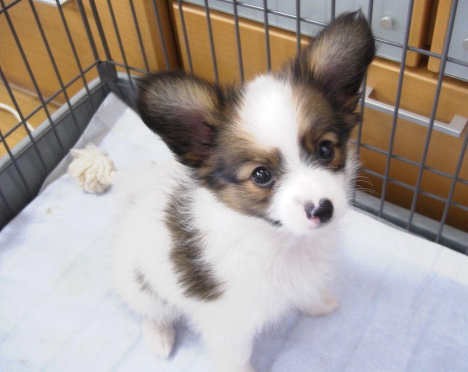 子犬時代_a0027126_10244378.jpg