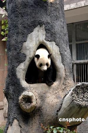 パンダの夏_b0052564_11273945.jpg