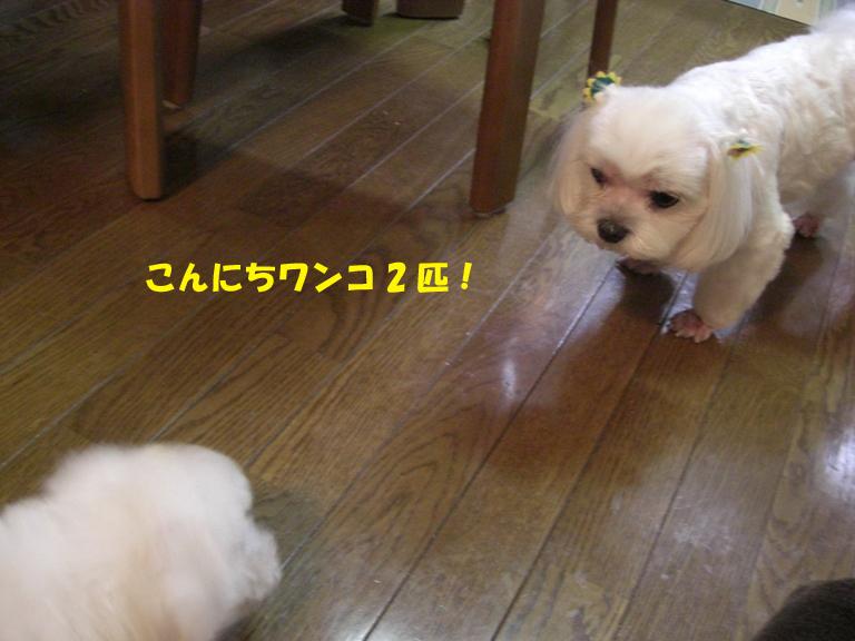 b0060071_00135.jpg