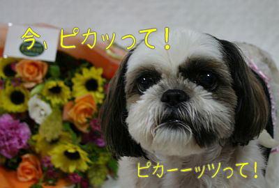 f0058277_20114079.jpg