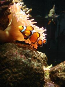 ランチはやっぱり魚料理~ジェノヴァ_f0106597_17584353.jpg