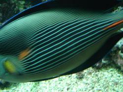 ランチはやっぱり魚料理~ジェノヴァ_f0106597_1824078.jpg
