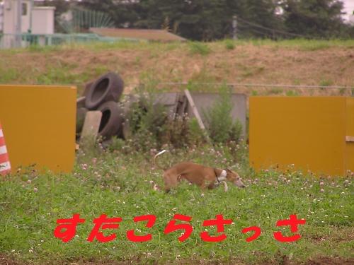 b0067012_1524444.jpg