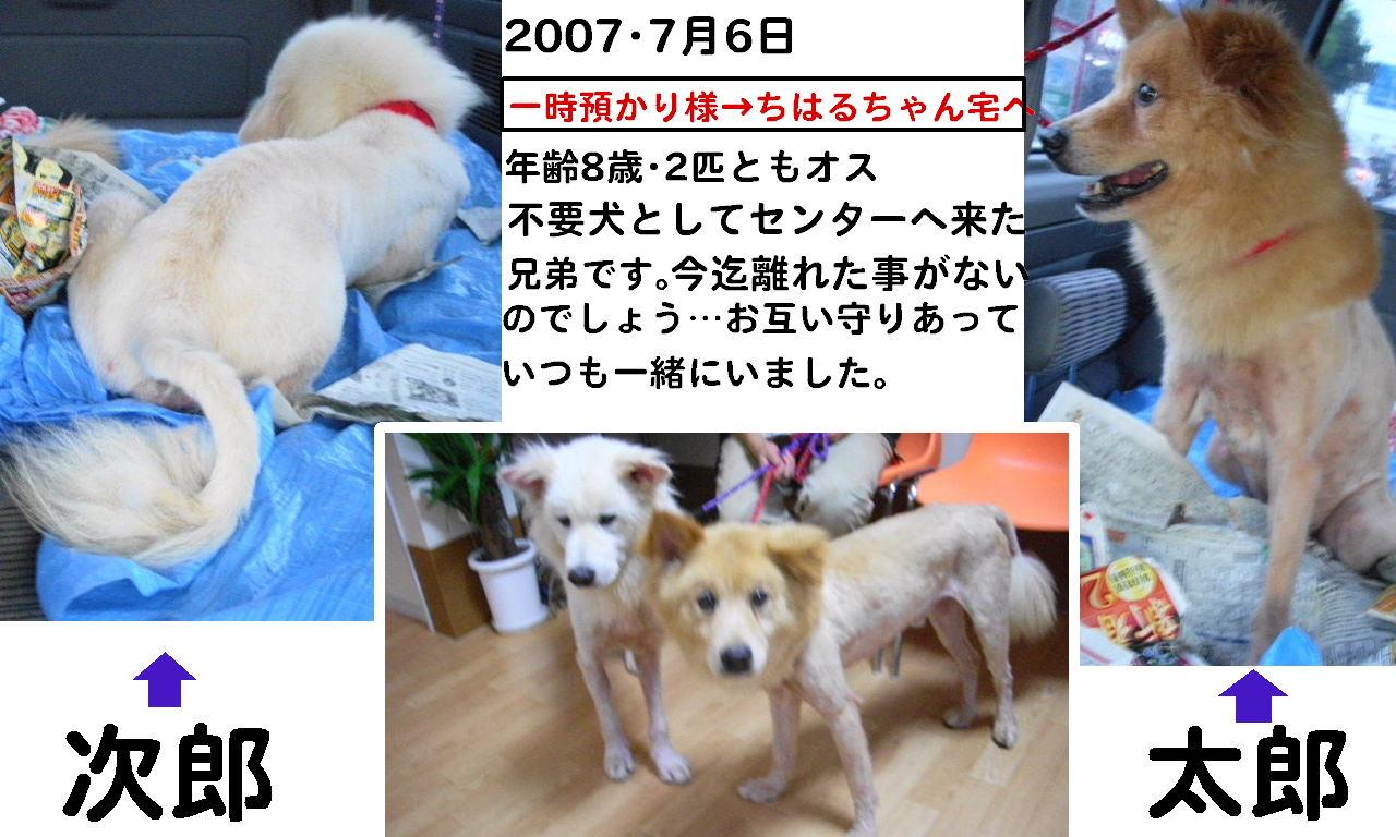 b0072501_16143569.jpg