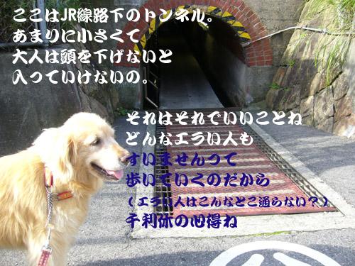 c0085188_1051139.jpg