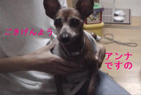 f0123589_16354015.jpg