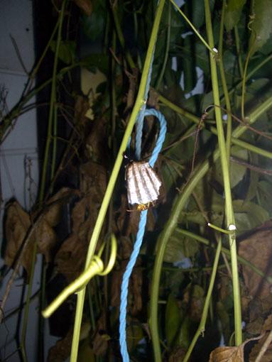 蜂の巣作り観察3ヵ月_e0104695_22122066.jpg