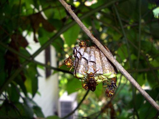 蜂の巣作り観察3ヵ月_e0104695_22142976.jpg