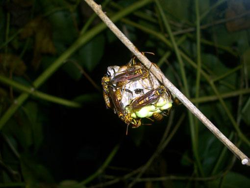蜂の巣作り観察3ヵ月_e0104695_221583.jpg