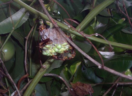 蜂の巣作り観察3ヵ月_e0104695_22173177.jpg