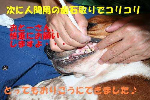 f0121712_12325020.jpg