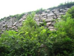 突然目の前にそびえるように石垣が現れます。草木の中にくっきりとした石垣の目が綺麗です。