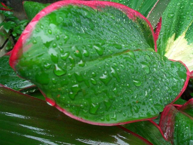 雨の庭から・・・。_e0054438_18313250.jpg