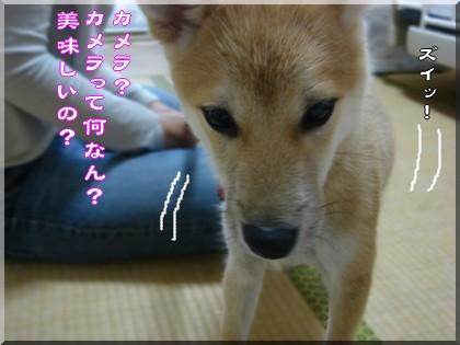 b0078073_222486.jpg