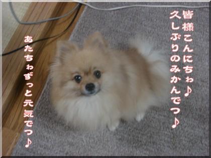 b0078073_2244225.jpg